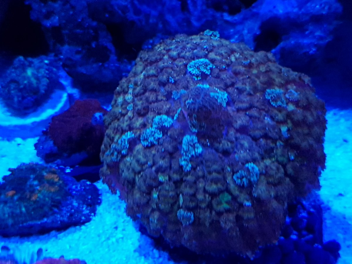 Can Someone Help Me With This Mushroom Id Reef2reef