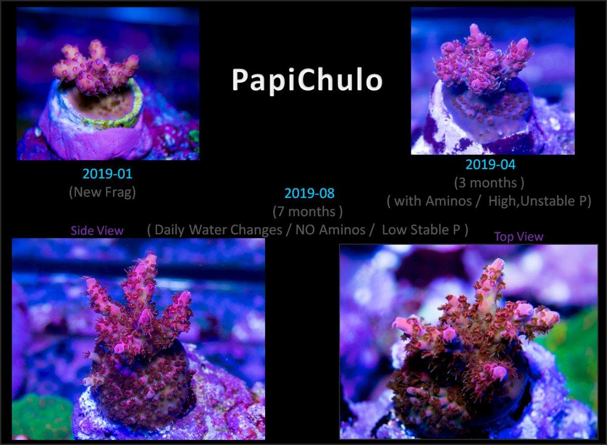 2019-08-20_PapiChuloProgress.jpg