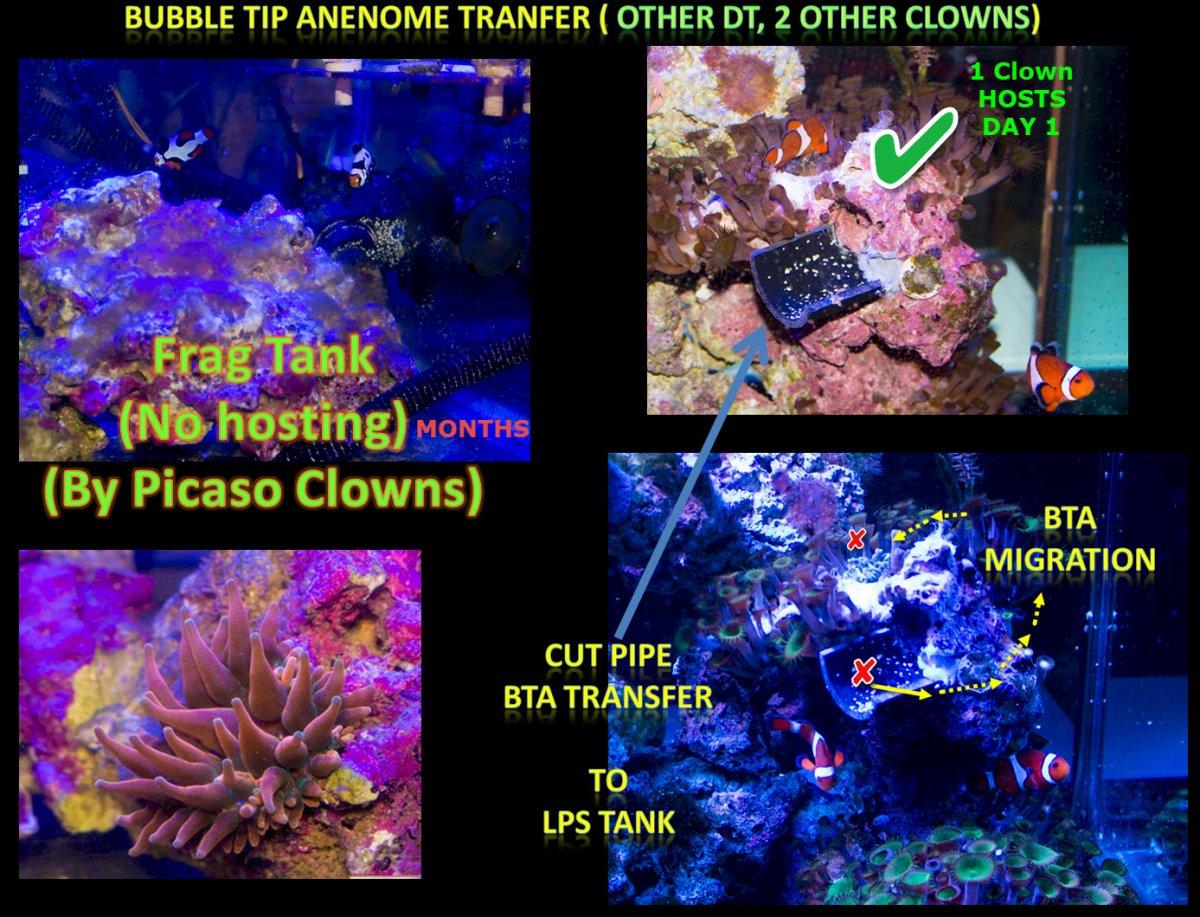 2019-10-02_BTA-TankClownHosting.jpg