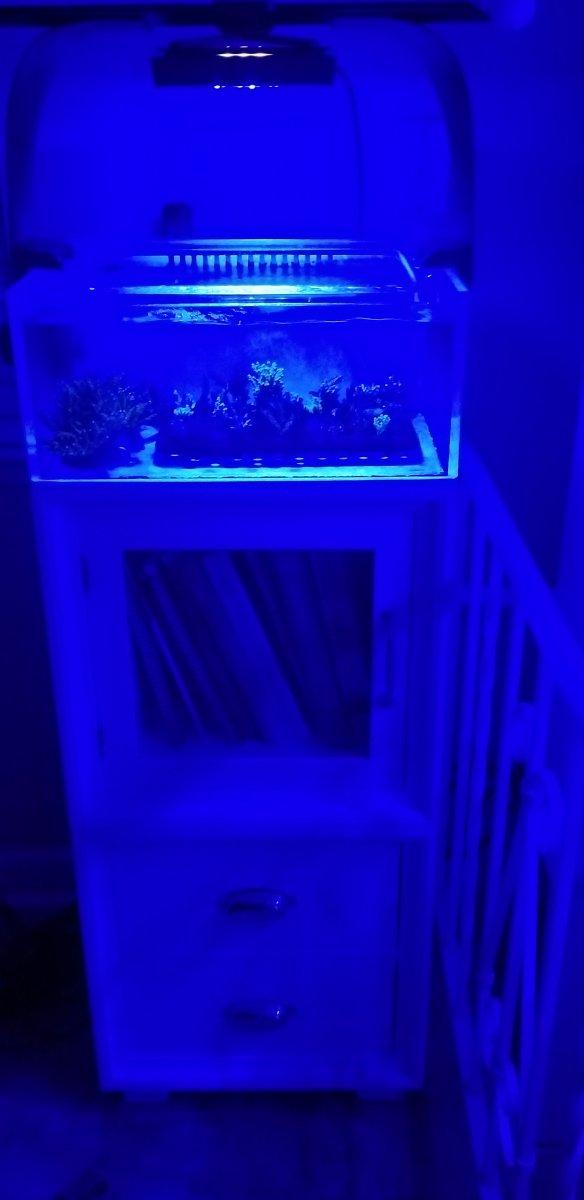 California Aquariums Fragging Advanced Acrylics Frag