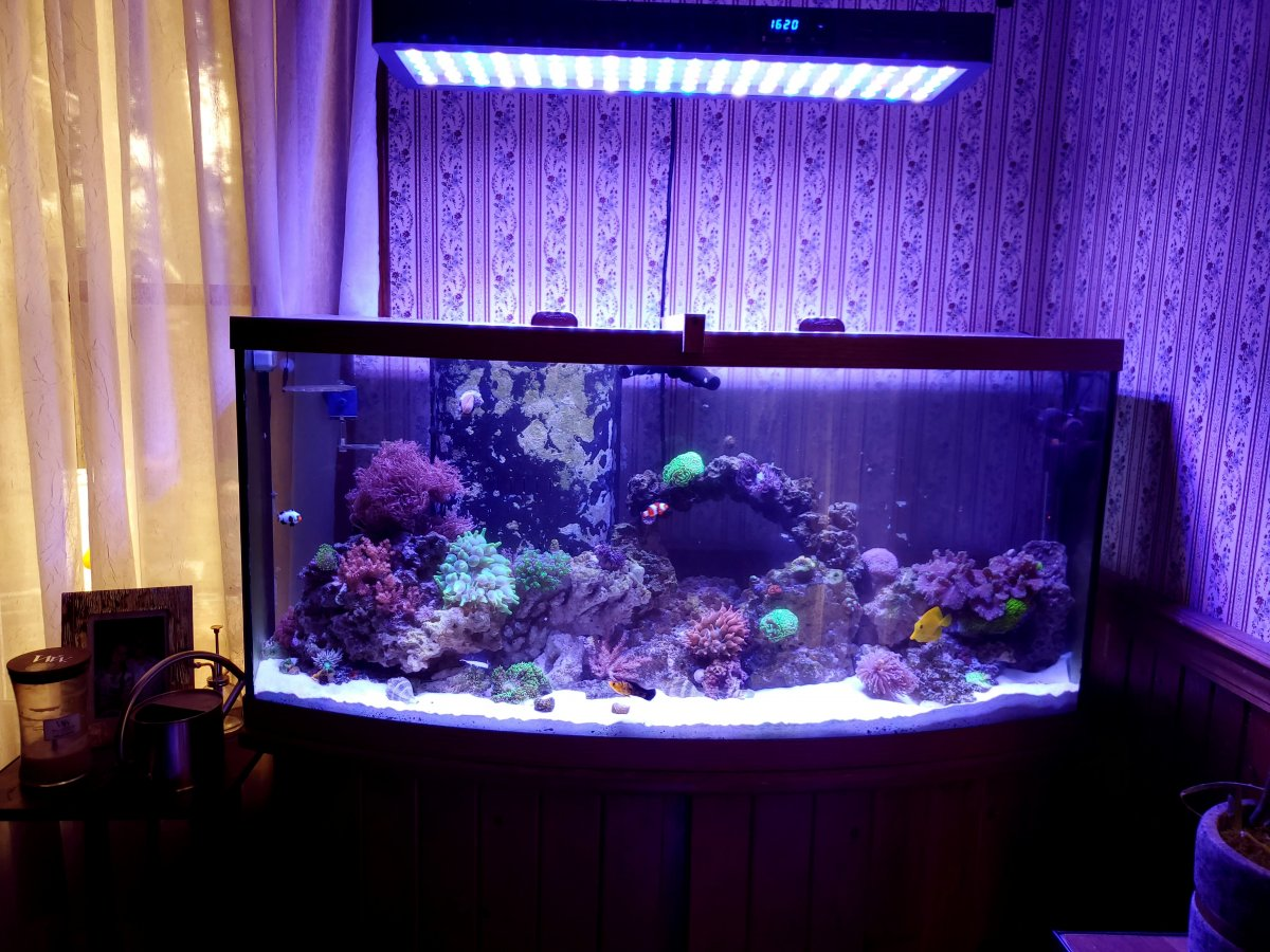 Build Thread 75 Gallon Reef Tank Build Reef2reef Saltwater And Reef Aquarium Forum