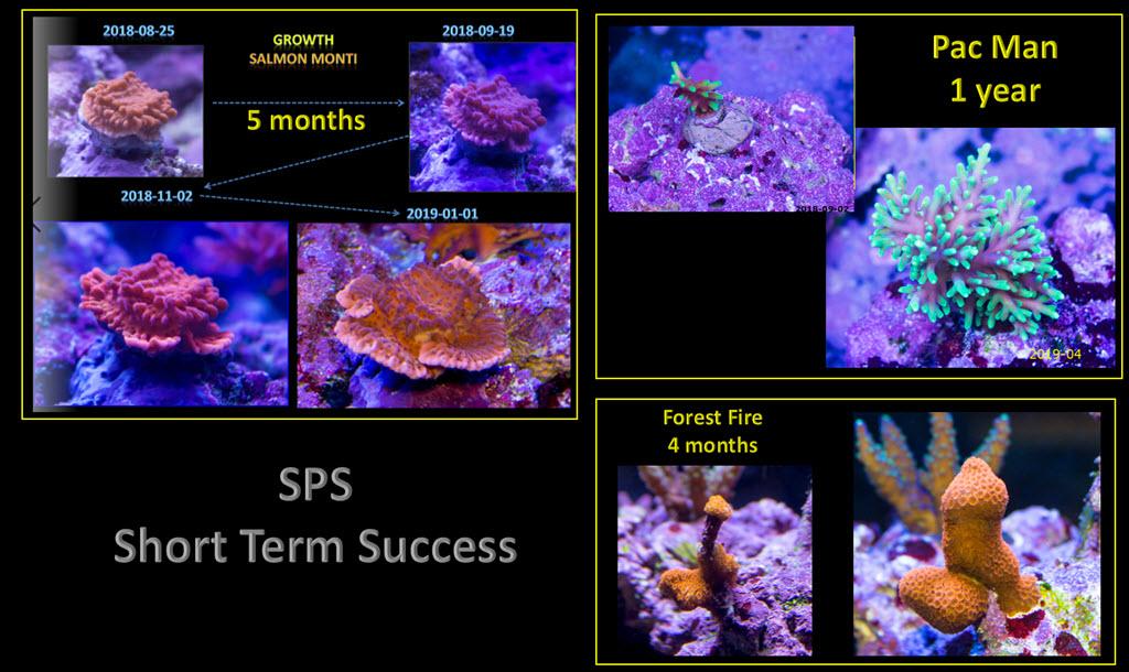 2020-02-10_ShortTermSPSsuccess.jpg