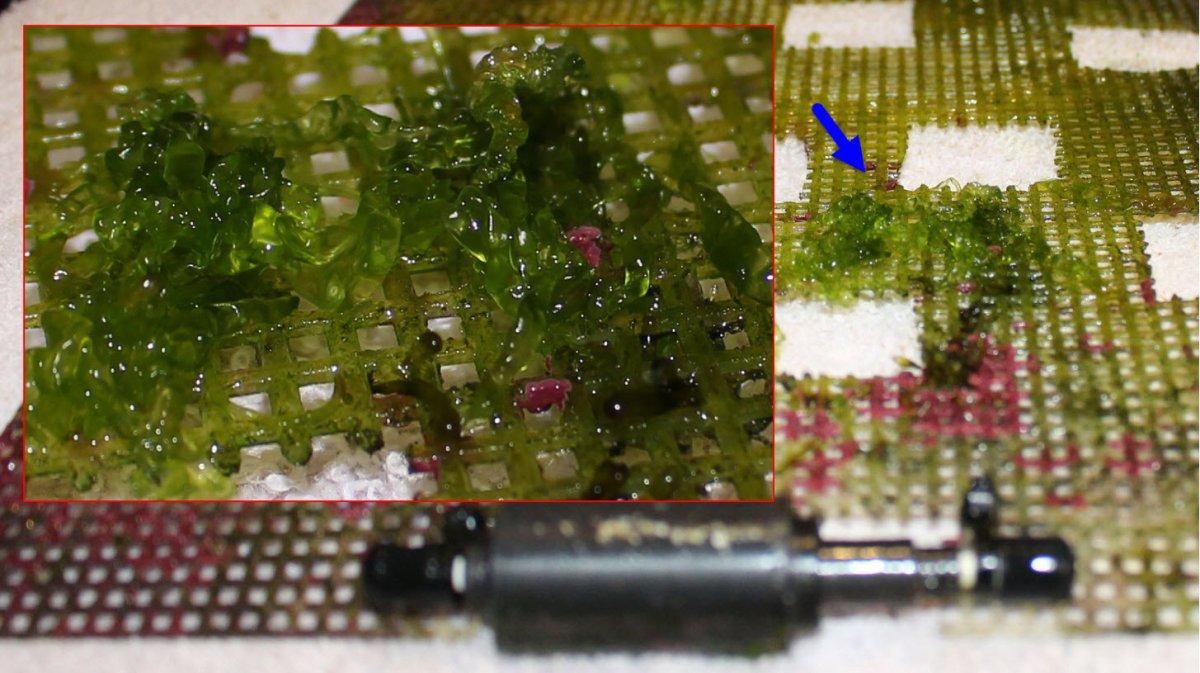 2020-03-04_MacroAlgaeOnScreen.jpg