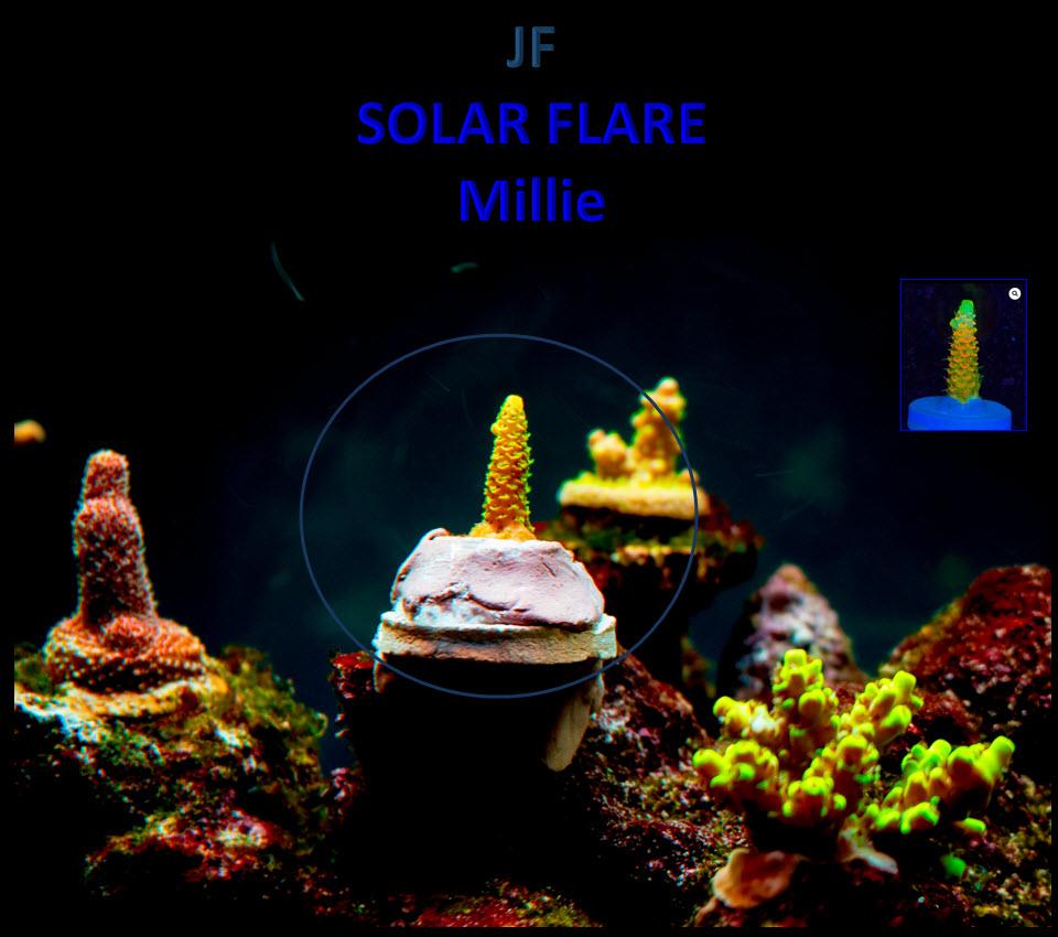 2020-06-11_JasonFox-SolarFlareMilli.jpg