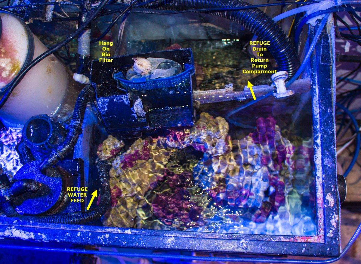 2021-03-09_BoxFish-RefugeIsolation.jpg