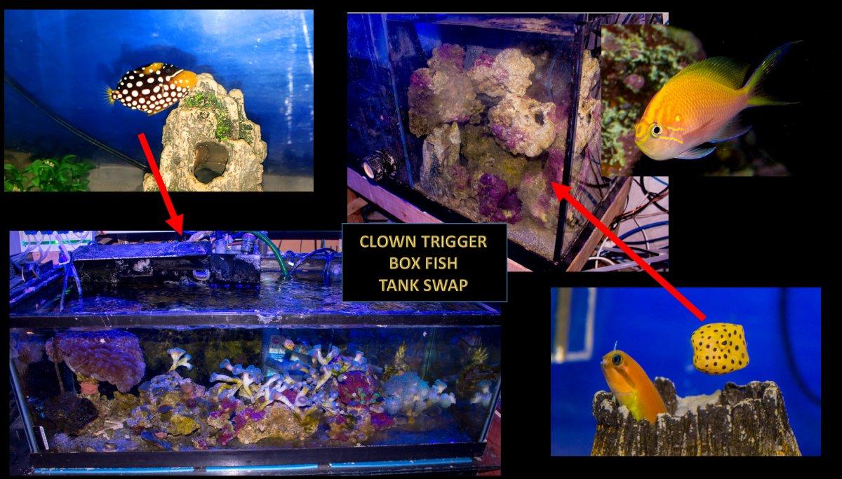 2021-04-15_ClownTrigger-BoxFish.jpg