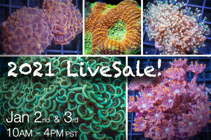 2021-LiveSale.jpg
