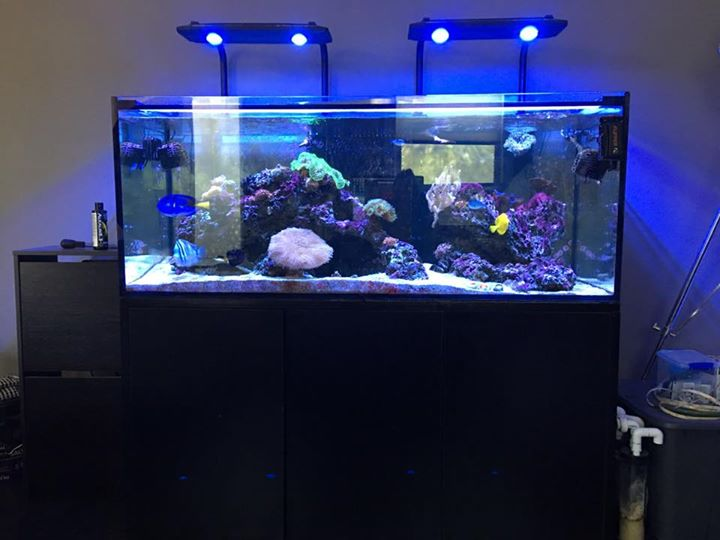 Fs 150 gallon sc aquariums reef tank reef2reef for Sc saltwater fish
