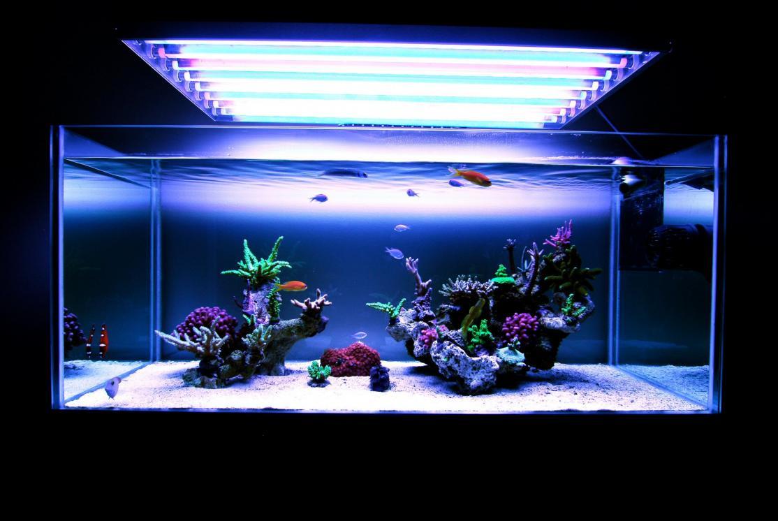 Minimalist Aquascaping Page 3 Reef2reef Saltwater And Reef Aquarium Forum