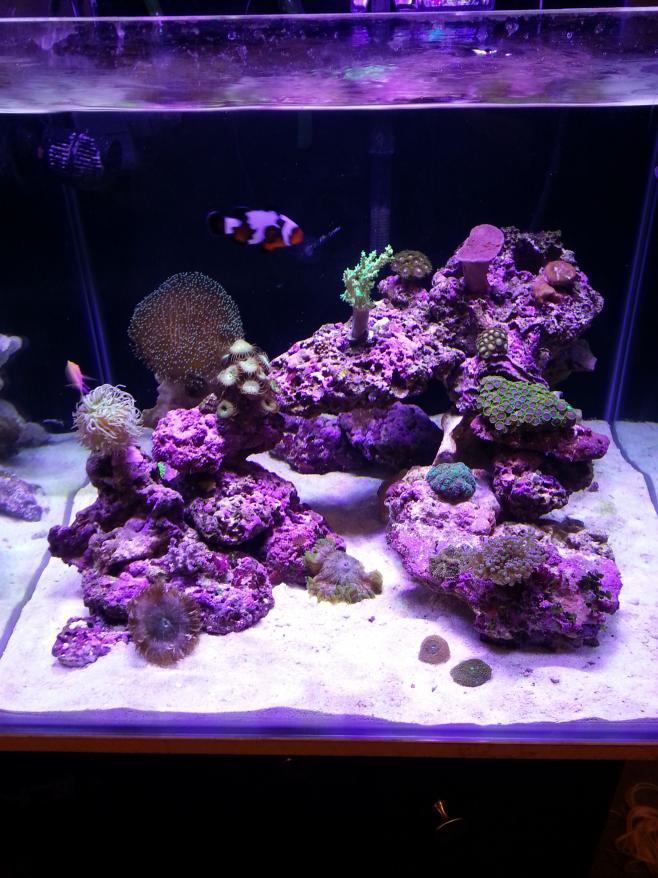 Aquascaping rears its ugly head again... | REEF2REEF ...