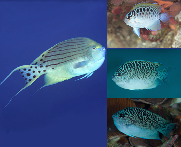 3-6-Reefs com - takeuchii.jpg