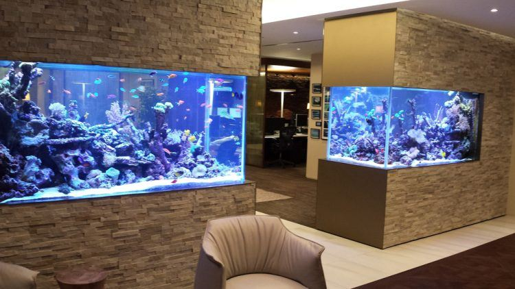 30-Fabulous-Fish-Tanks-I-Would-Be-Proud-To-Have-In-My-Home3-750x422.jpg