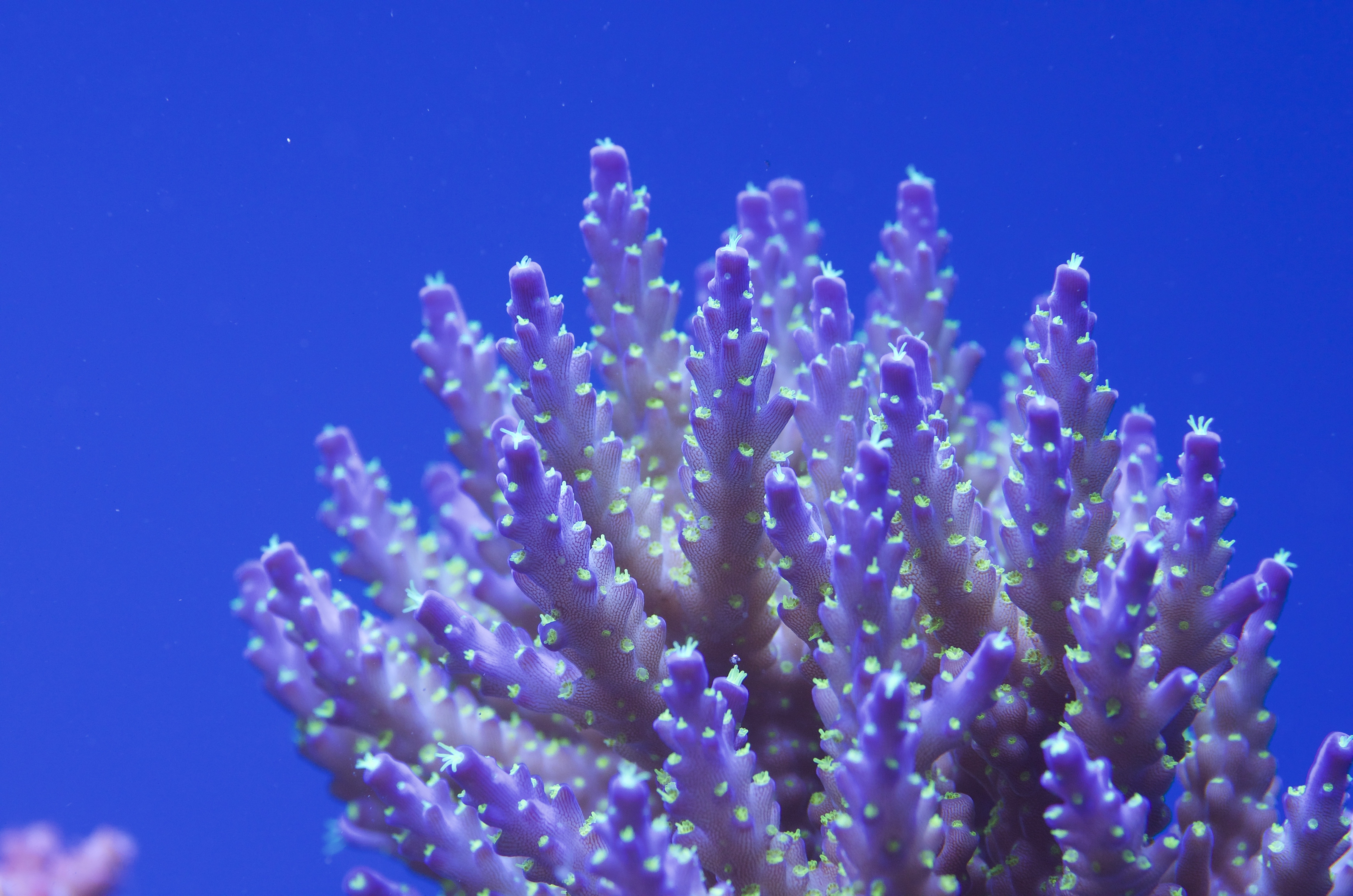 The 650l Reef Tank of Pawel Szember