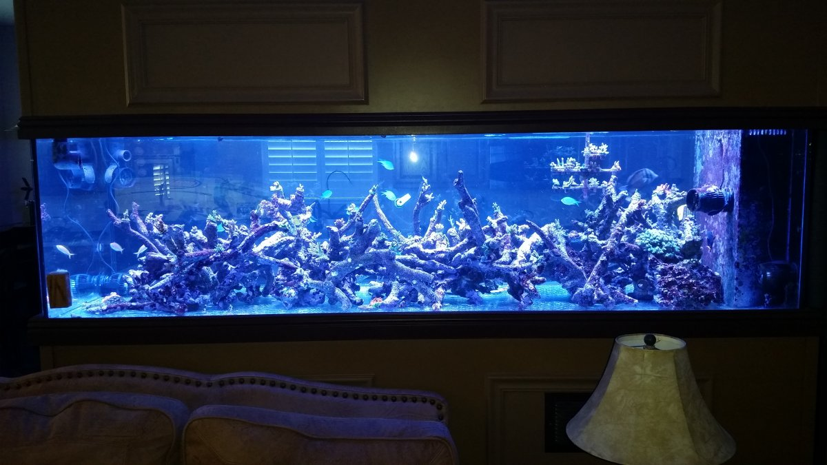Tonga Branch Aquascaping Question | REEF2REEF Saltwater ...