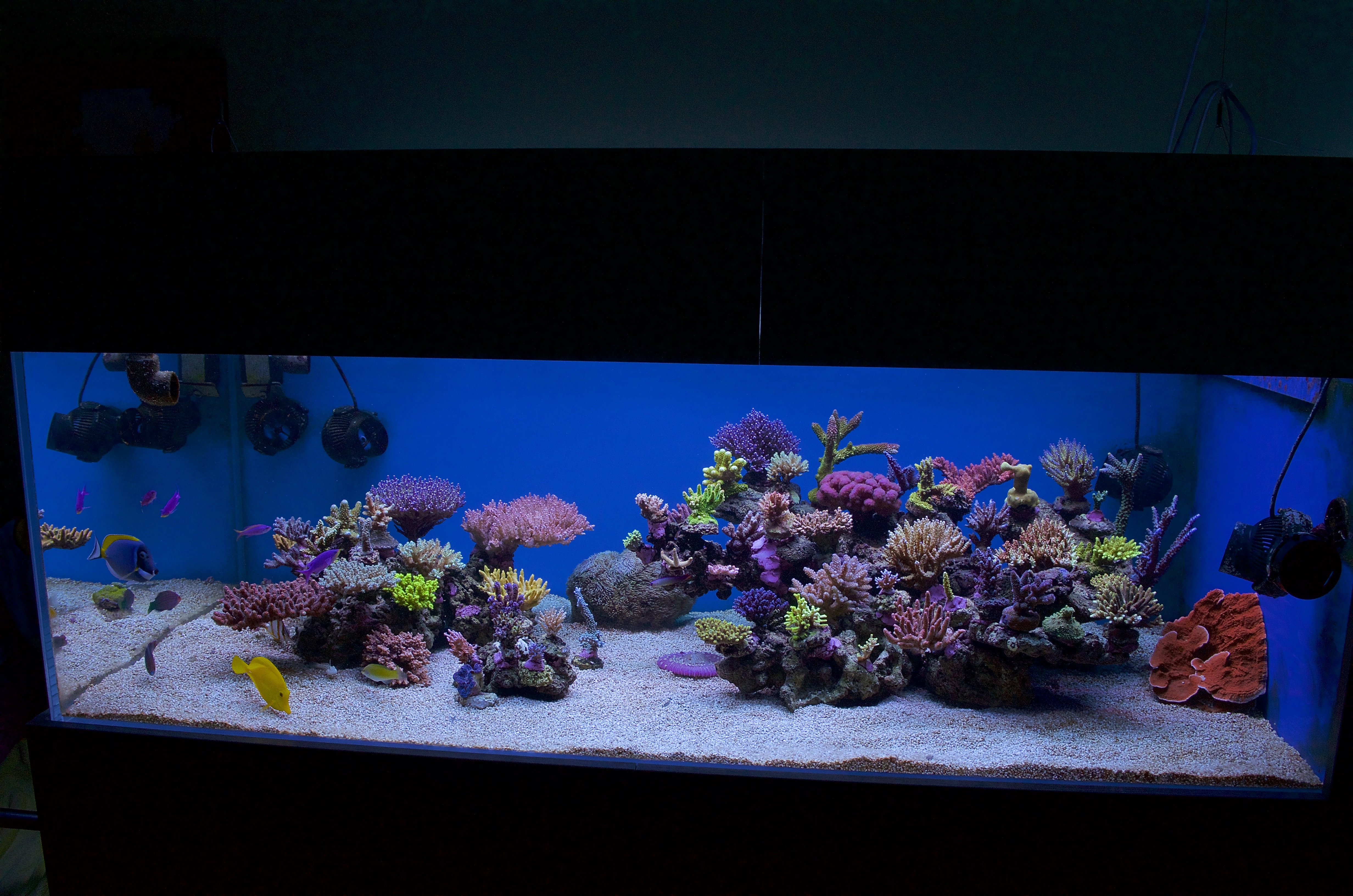 The 650l Reef Tank of Pawel Szember
