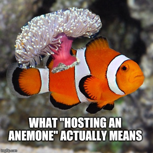 I'm bored, I made a meme, show me yours   REEF2REEF ...