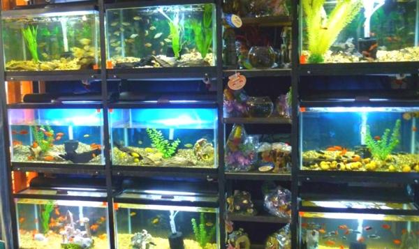 The lfs redoux reef2reef saltwater and reef aquarium forum for Fish store reno