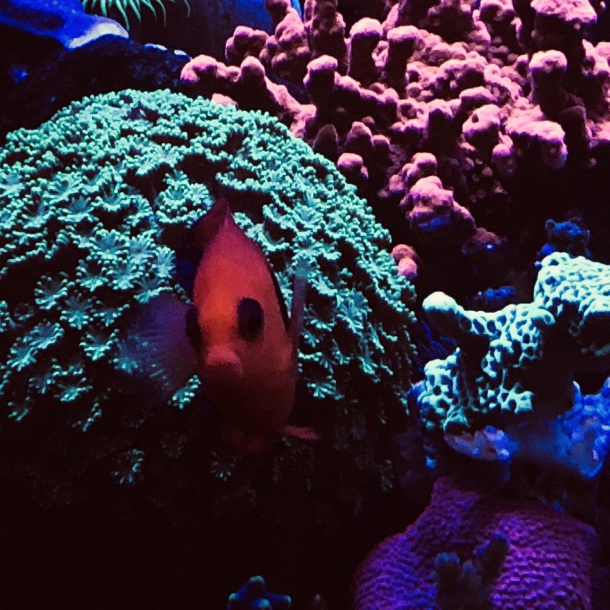 360g corals1.jpg