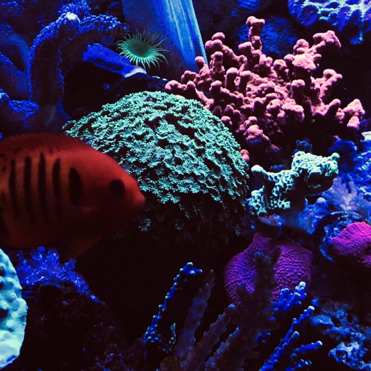 360g corals2.jpg