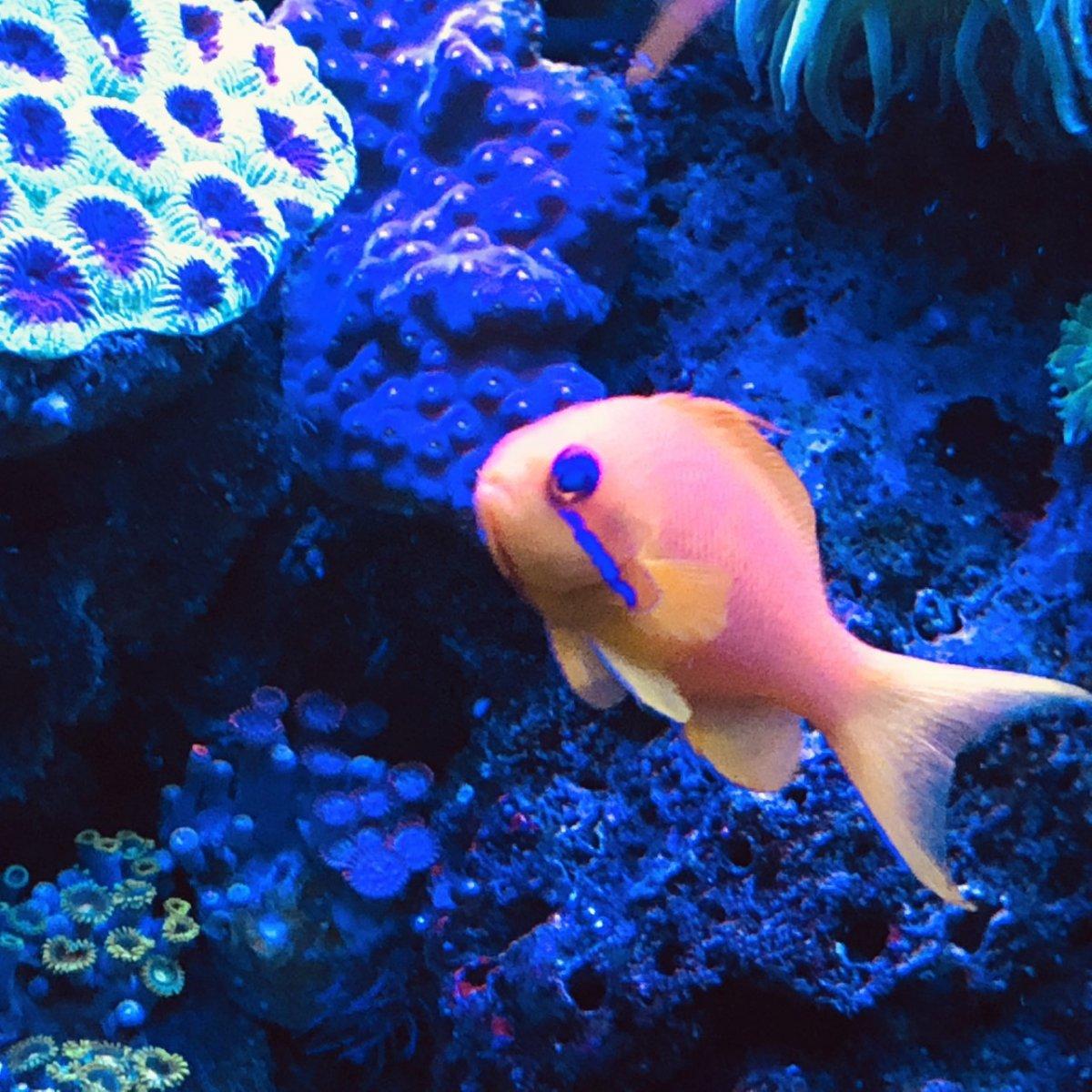 360g corals9.jpg