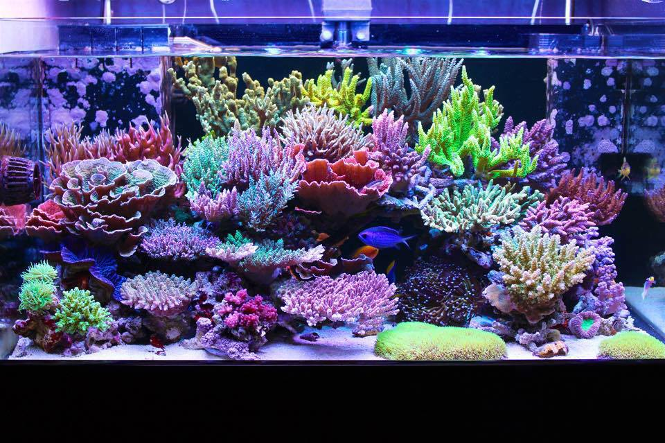 MikeC Soft Coral Reef Tank - YouTube