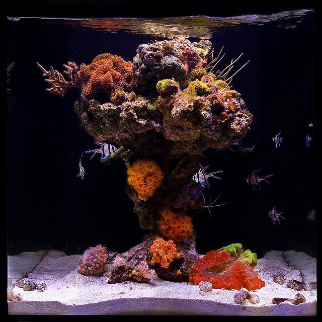 Johnny Ciotti S Red Sea Reefer 250 Reef2reef Saltwater And Reef Aquarium Forum