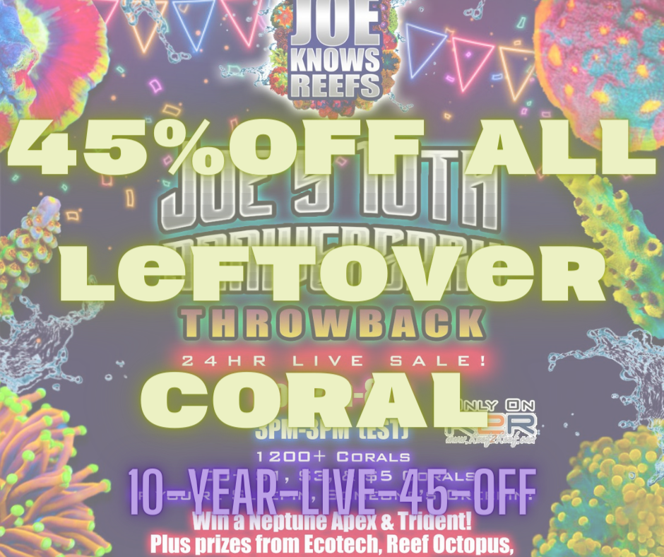 45%OFF All Leftover Coral.png