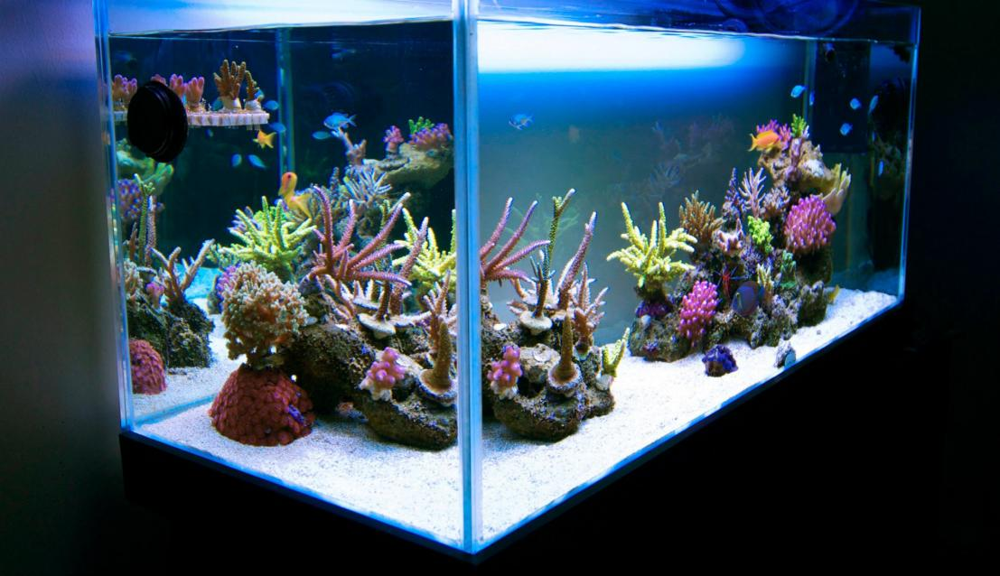 Minimalist Aquascaping | Page 3 | REEF2REEF Saltwater and ...