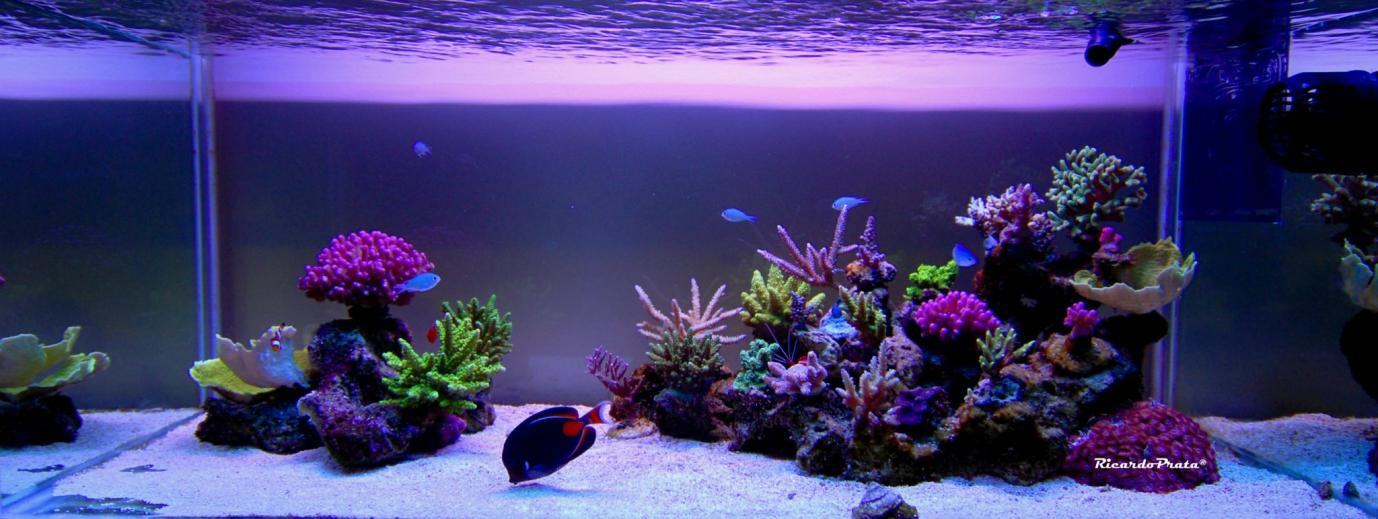 Aquascape Reef Tank