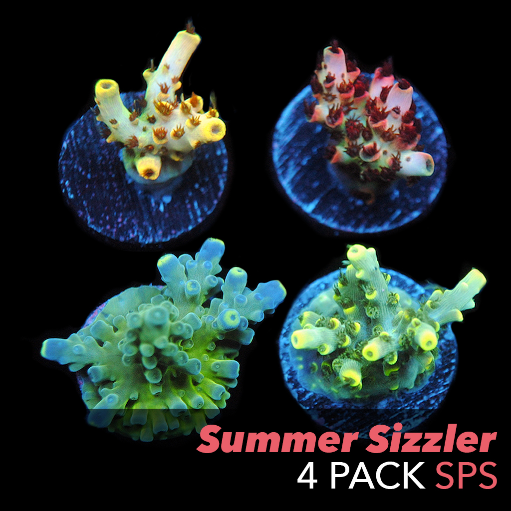 4packSPS.jpg