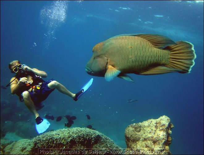The Holy Grail - Rare marine fish | REEF2REEF Saltwater ...