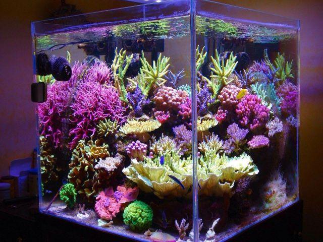 531601_10200960300956289_654845330_n.jpg & Smallest SPS Dominated Reef Tank | REEF2REEF Saltwater and Reef ...