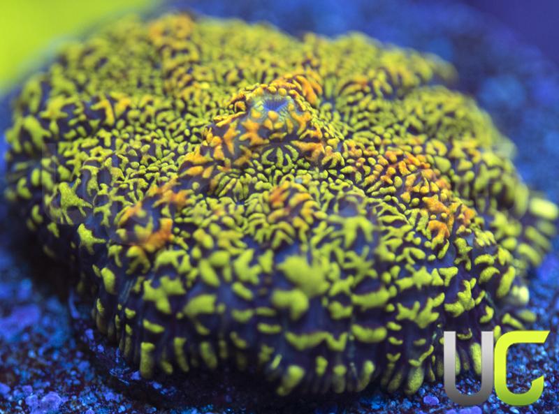 568-Mushroom-unsure-F33.jpg
