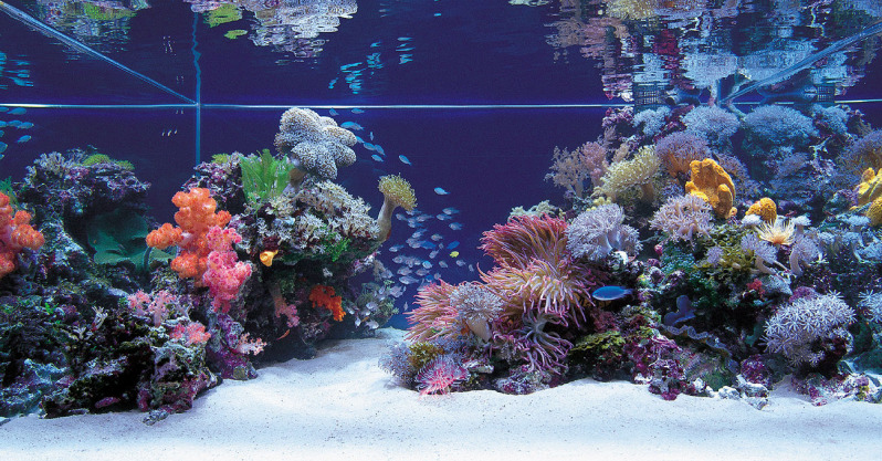 Tips And Tricks On Creating Amazing Aquascapes Reef2reef Saltwater And Reef Aquarium Forum