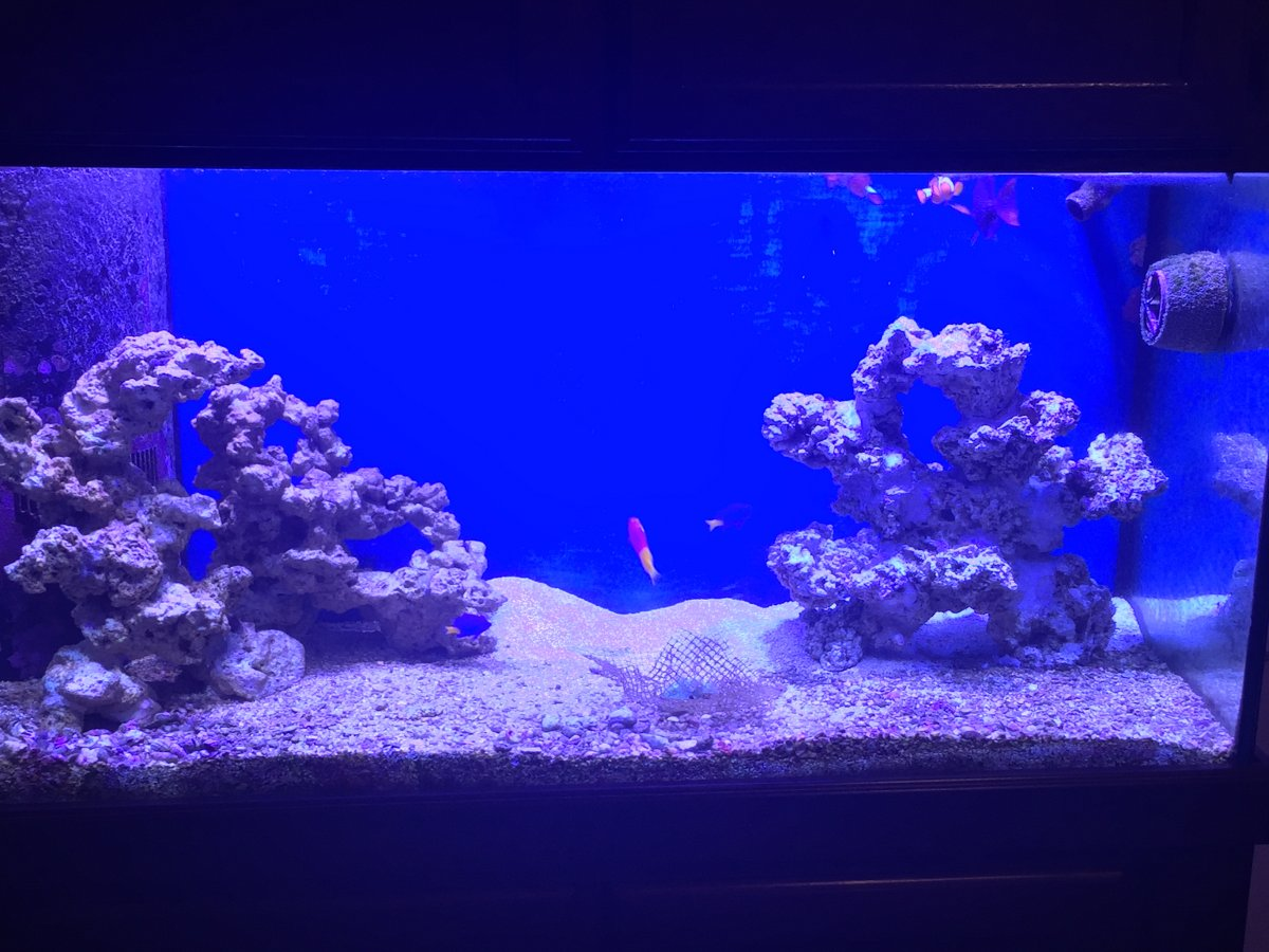 90 Gallon Aquascaping Reef2reef Saltwater And Reef Aquarium Forum
