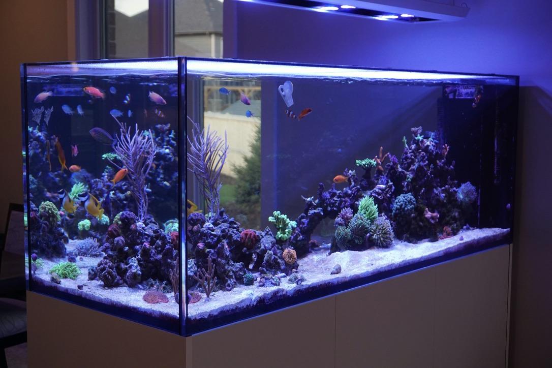 Build Thread Mikedb S 140 Gallon Peninsula Reef2reef Saltwater And Reef Aquarium Forum