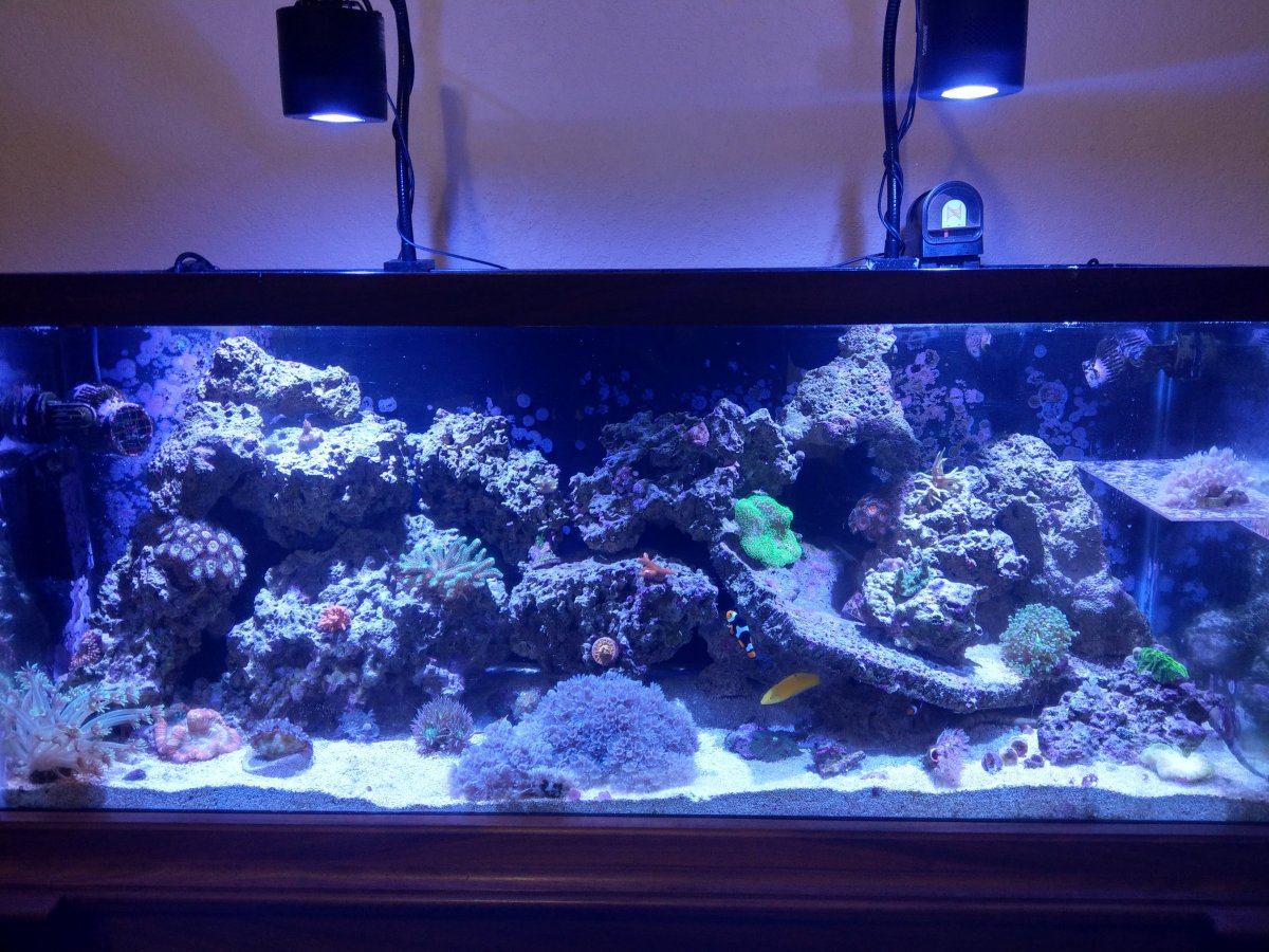 Build Thread Emerson S 75 Gallon To 90 Gallon Upgrade Reef2reef Saltwater And Reef Aquarium Forum