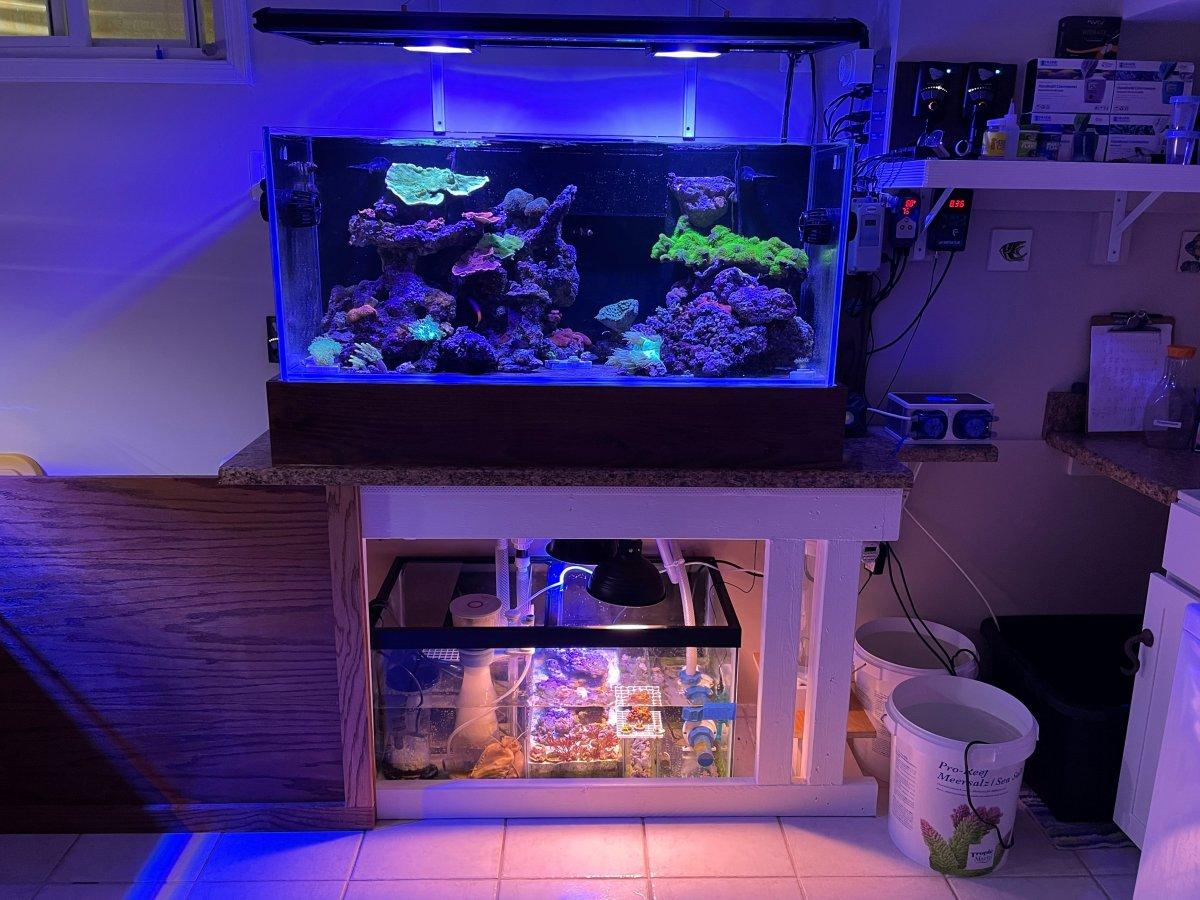 75G Reef 2.jpg