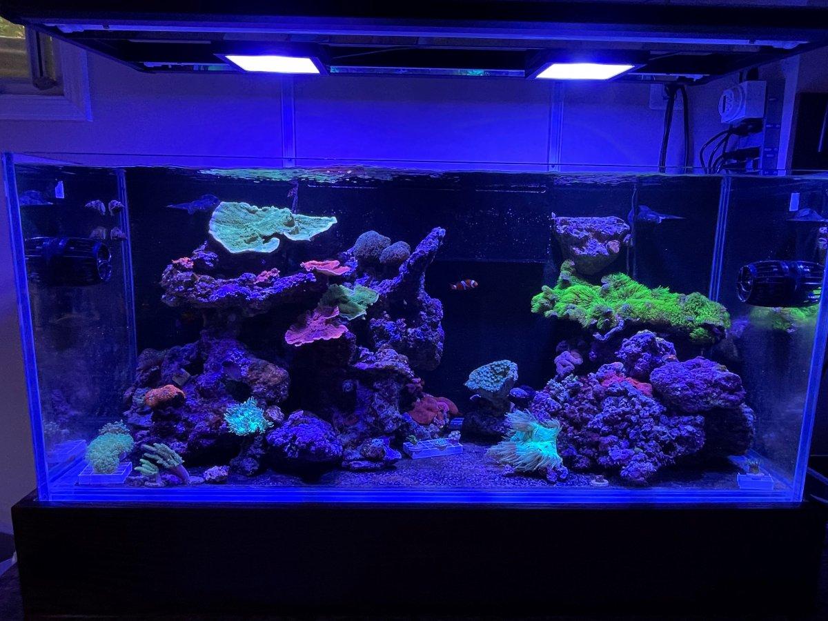 75G Reef.jpg