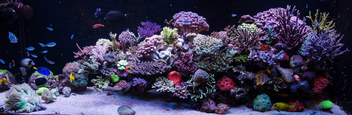 Ideas on floating aquascape | REEF2REEF Saltwater and Reef ...