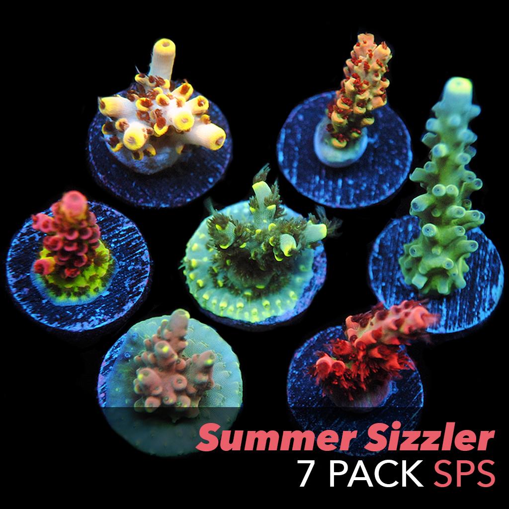 7packSPS.jpg