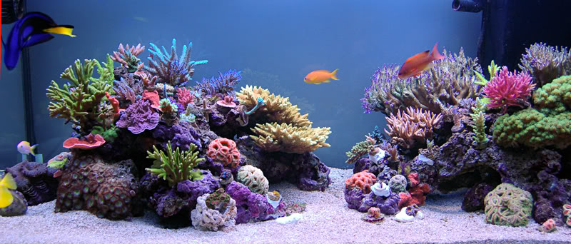 Tips and Tricks on Creating Amazing Aquascapes | REEF2REEF ...
