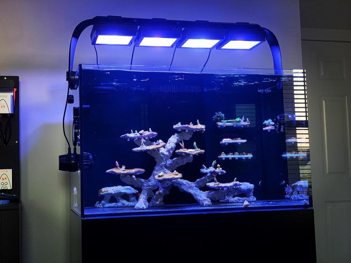 Indiana Bonsai Reef Aquascape Reef2reef Saltwater And Reef Aquarium Forum