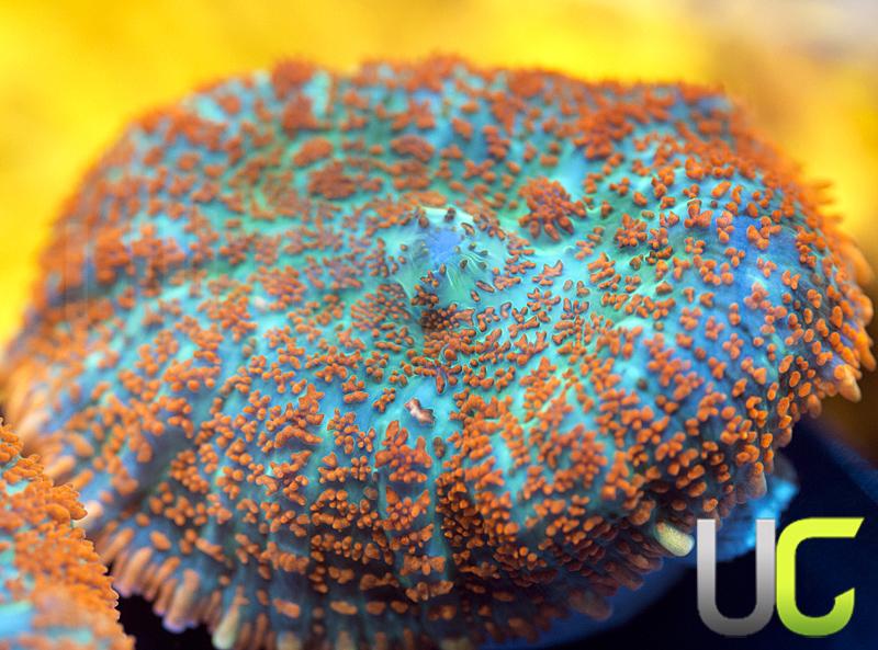 87-unsure-Mushroom.jpg