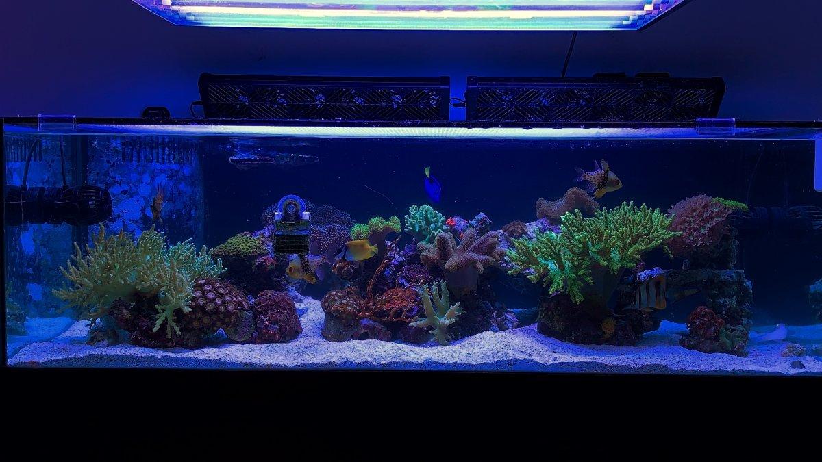 Build Thread 80g Shallow Reef Reef2reef Saltwater And Reef Aquarium Forum