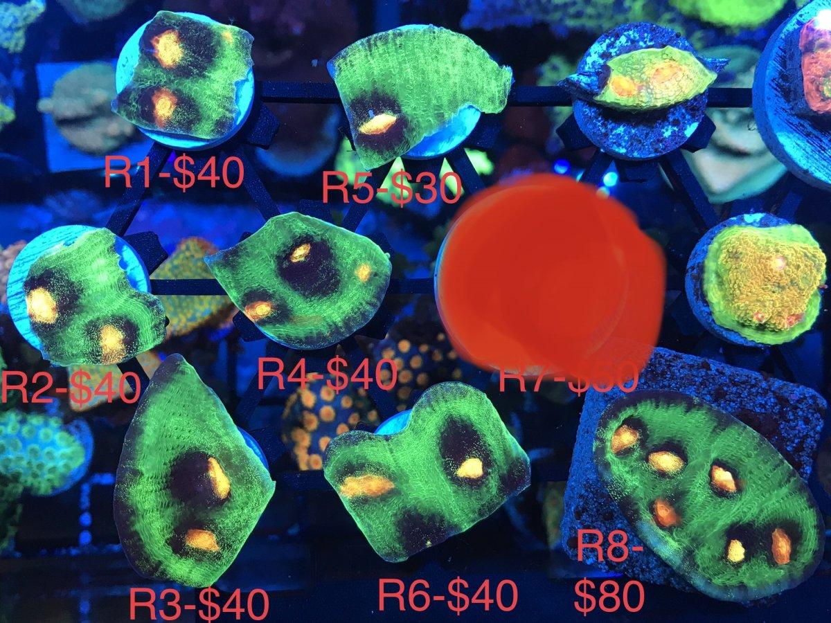 9CC0F678-B470-42F2-9C1D-45DEF8EDD16D.jpeg