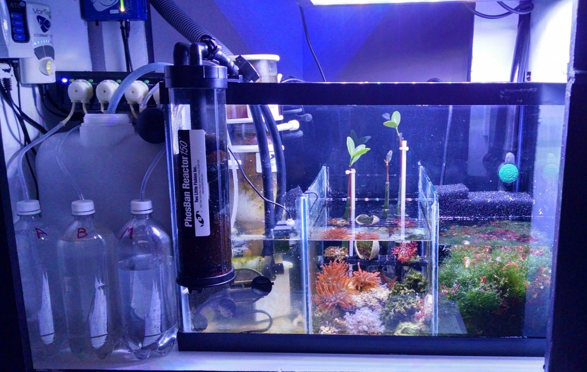 What do you use for your ato reservoir? | REEF2REEF