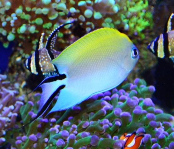 Reef Aquarium Facts 344 There Is No 100 Reef Safe