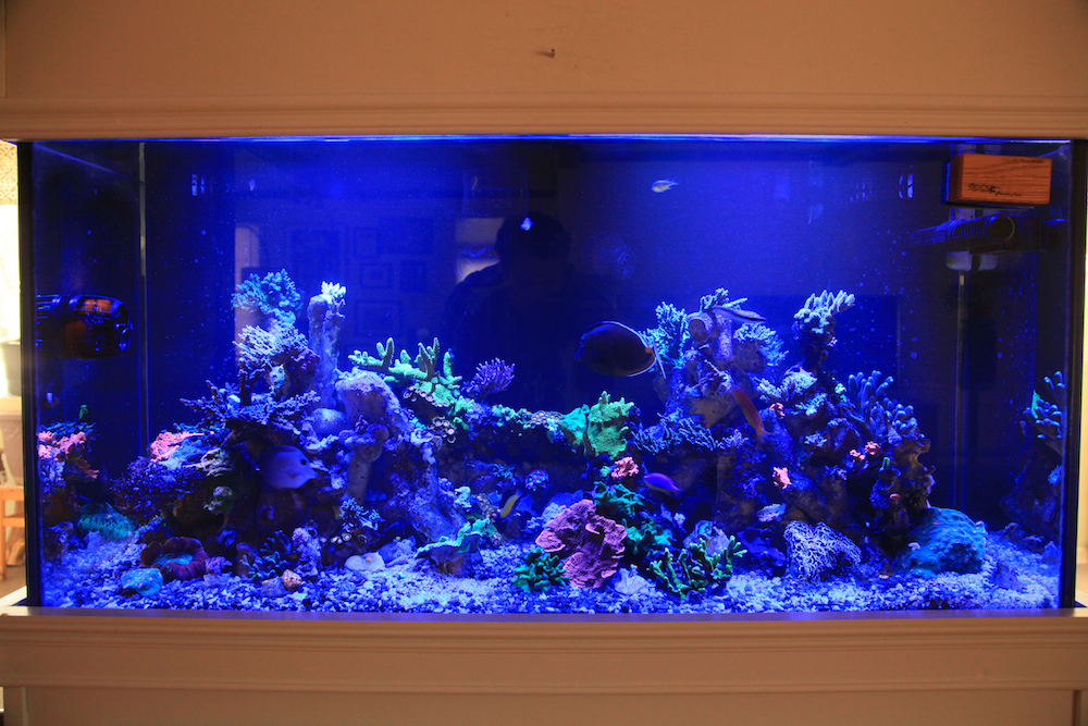 A full tank shot under blue light matt geldof 120 gallon reef aquarium.jpg