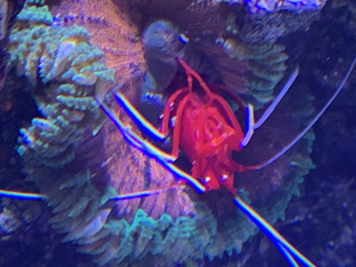 Rock Flower Anemone Removal Reef2reef Saltwater And Reef Aquarium Forum
